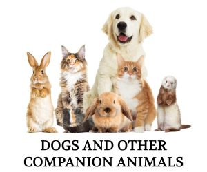 dogs-others-nobg